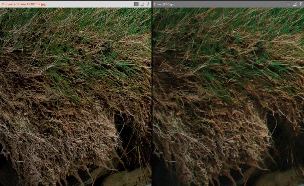 Topaz JPEG to RAW AI - Review